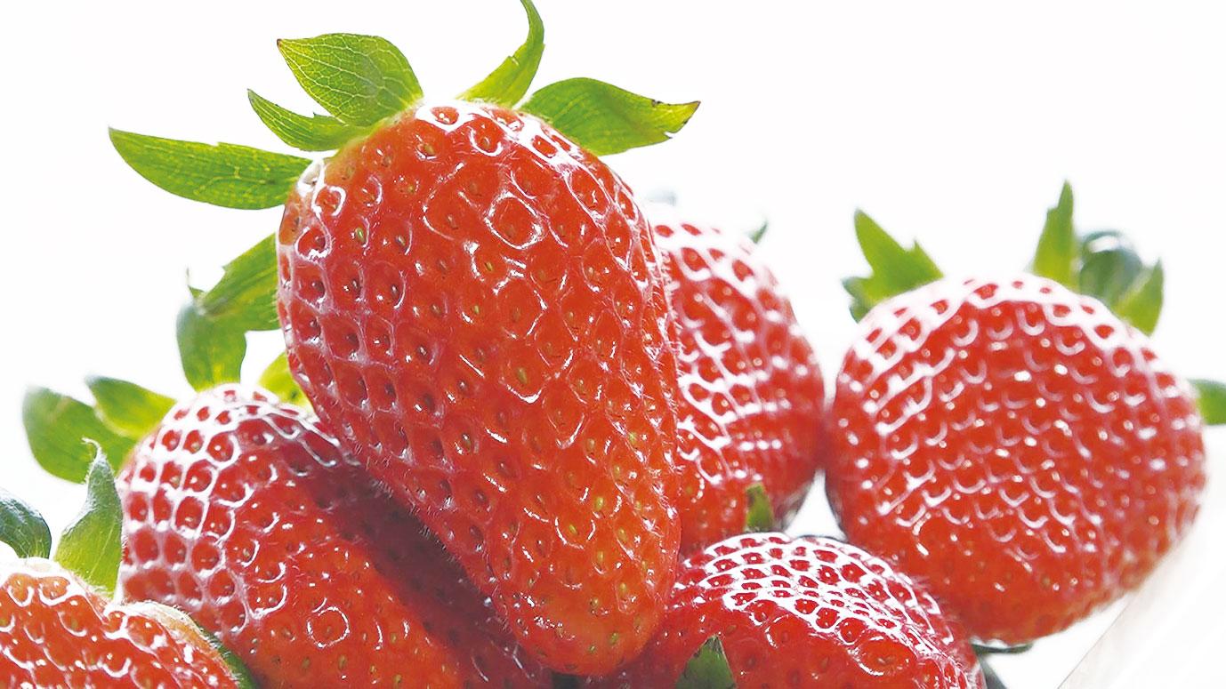 旬の野菜・果物を栽培。いちごの品種は「あきひめ」